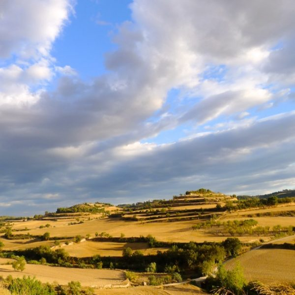 paisatge estiu la segarra (2)